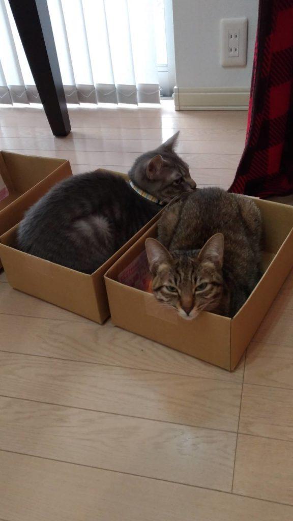 2匹が箱に入っている写真