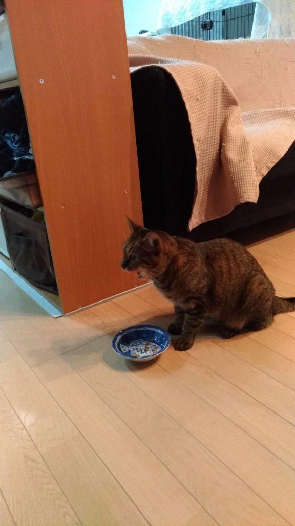 モカの食事の写真
