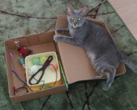 おもちゃ箱と猫の写真